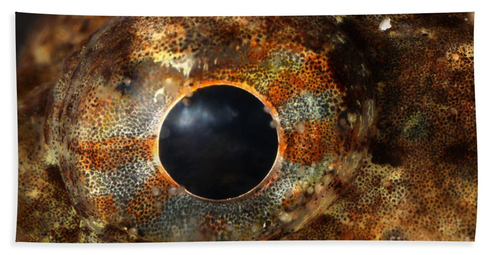 Sculpin Hand Towel featuring the photograph Eye Of Shorthorn Sculpin by Ted Kinsman