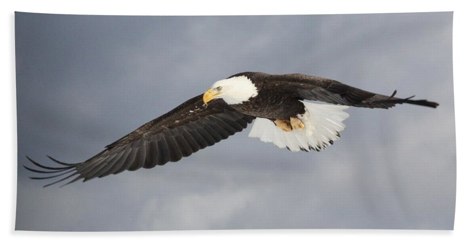 Bald Eagle Hand Towel featuring the photograph Eye On The Prize by Teresa McGill