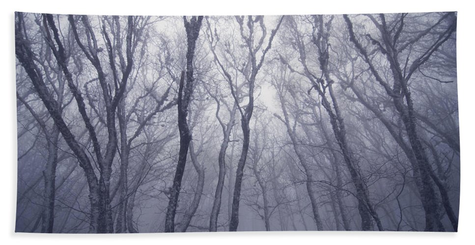 Forest Bath Sheet featuring the photograph Fairy Tale Forest by Zoya S