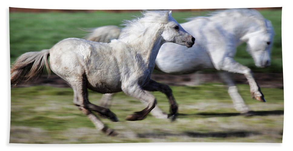 Horse Bath Towel featuring the photograph Family by Karen Ulvestad