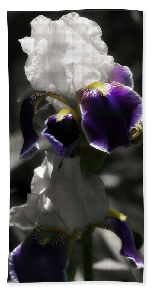 Digitally Hand Colored Hand Towel featuring the photograph Filoli Iris by Linda Dunn