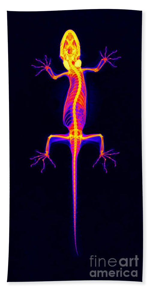 Gecko Hand Towel featuring the Flying Gecko X-ray by Ted Kinsman