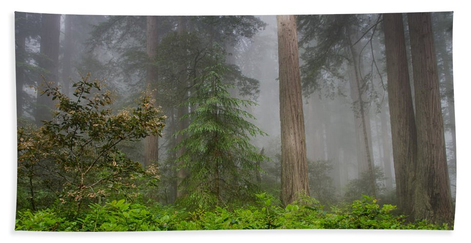 Lady Bird Johnson Grove Bath Sheet featuring the photograph Fog And Redwoods by Greg Nyquist