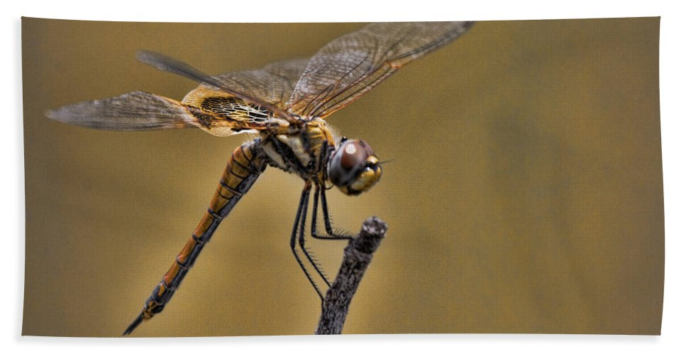 Dragonfly Hand Towel featuring the photograph Golden Brown by Douglas Barnard