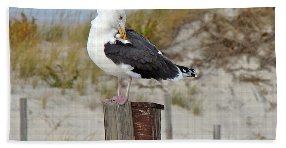 Gull Hand Towel featuring the photograph Great Black-backed Gull  Larus Marinus by Mother Nature
