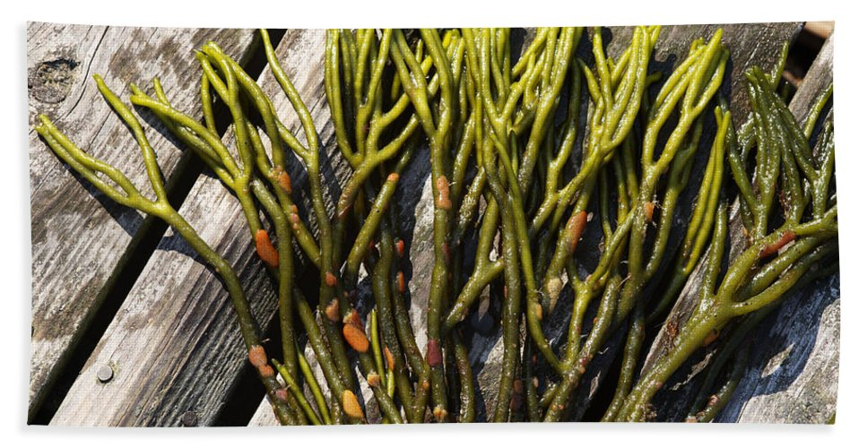 Green Fleece Hand Towel featuring the photograph Green Fleece Seaweed by Ted Kinsman