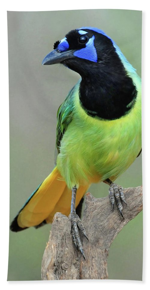 Green Jay Bath Sheet featuring the photograph Green Jay by Dave Mills