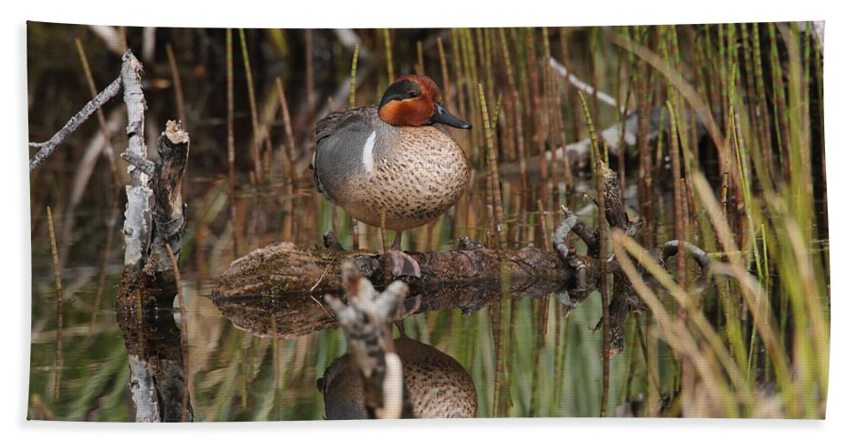 Doug Lloyd Hand Towel featuring the photograph Greenwing Teal by Doug Lloyd