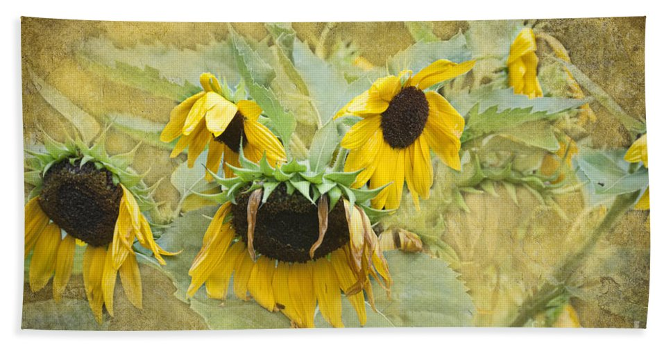 Sunflowers Hand Towel featuring the photograph Heavy Heads by David Arment