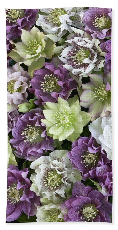 Vp Hand Towel featuring the photograph Hellebore Helleborus Sp Flowers by VisionsPictures