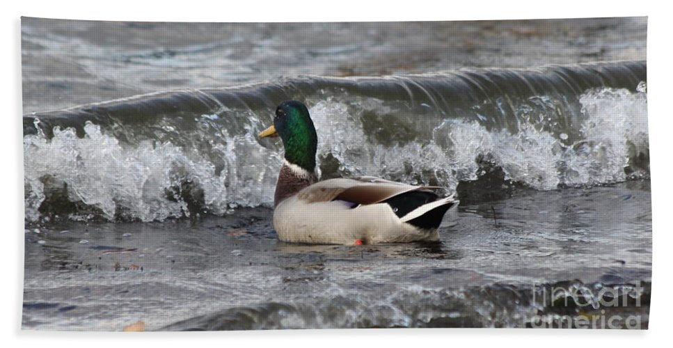 Mallards Bath Sheet featuring the photograph Here It Comes by Lori Tordsen