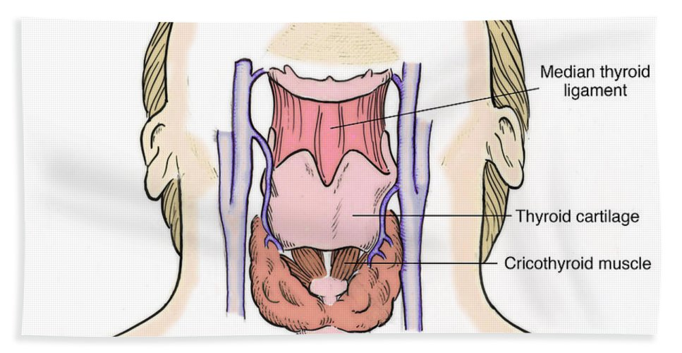 Illustration Of Throat Anatomy Hand Towel for Sale by Science Source