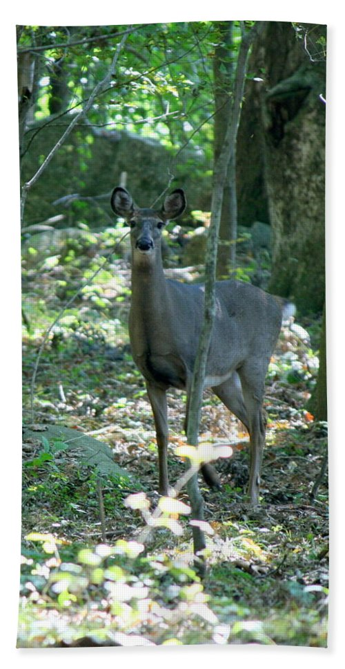 Deer Bath Sheet featuring the photograph Inquisitive by Neal Eslinger