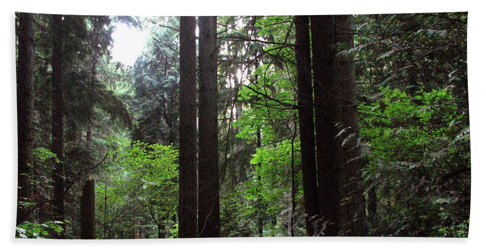 Landscape Hand Towel featuring the photograph Into The Wood by Kathleen Grace