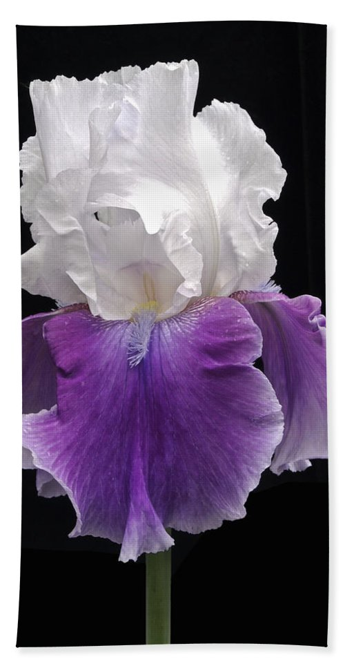 Flower Hand Towel featuring the photograph Iris 3 by Michael Peychich