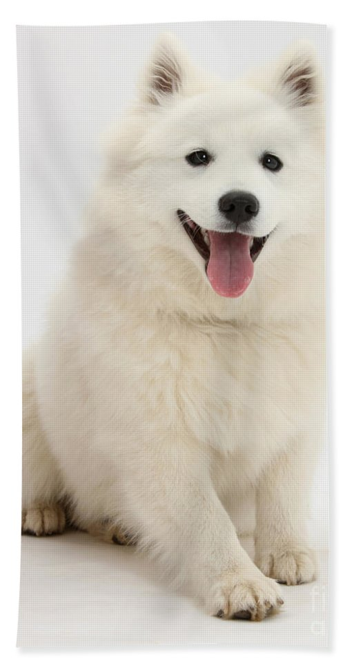 Nature Hand Towel featuring the photograph Japanese Spitz Dog by Mark Taylor