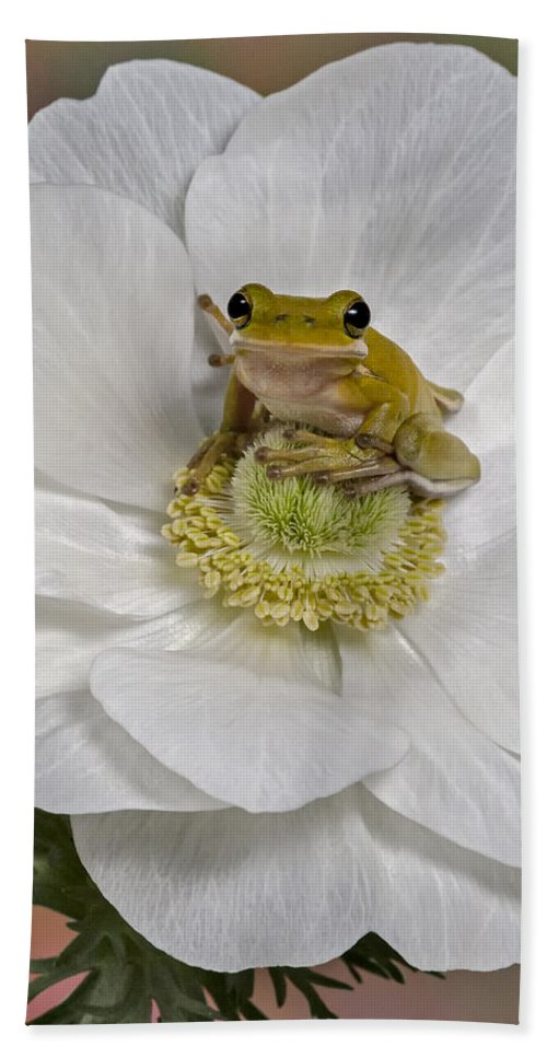 Green Tree Frog Bath Sheet featuring the photograph Kermit by Susan Candelario