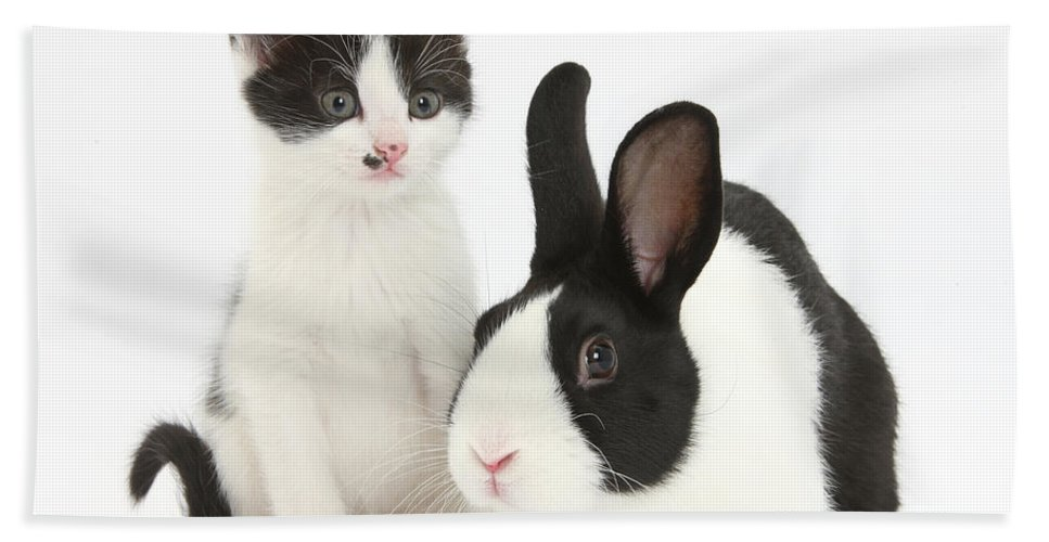 Nature Hand Towel featuring the photograph Kitten And Dutch Rabbit by Mark Taylor