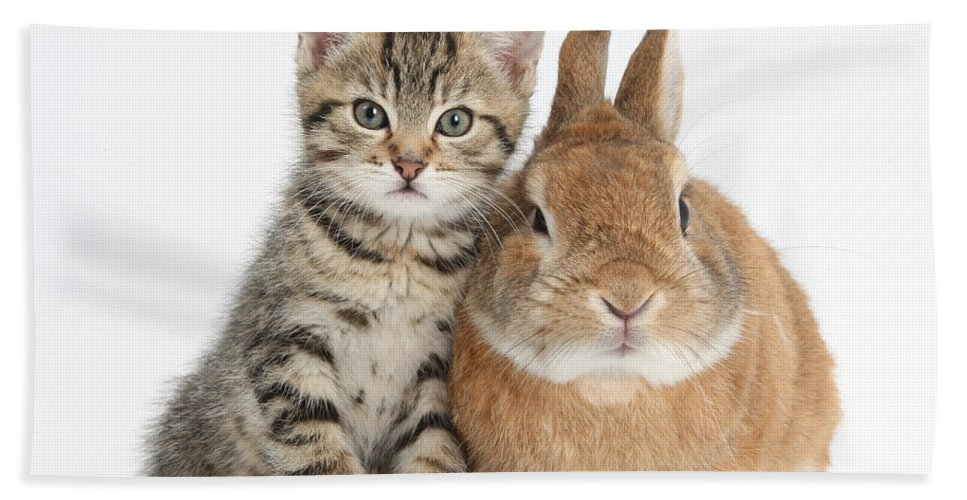 Nature Hand Towel featuring the photograph Kitten And Netherland Dwarf-cross Rabbit by Mark Taylor