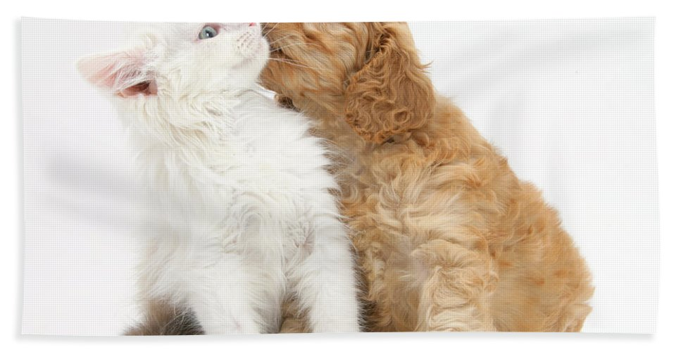 Animal Hand Towel featuring the photograph Kitten And Puppy by Mark Taylor