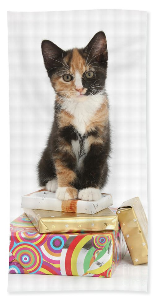 Animal Hand Towel featuring the photograph Kitten On Packages by Mark Taylor