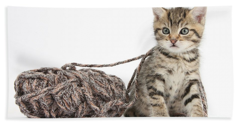 Nature Hand Towel featuring the photograph Kitten With Yarn by Mark Taylor