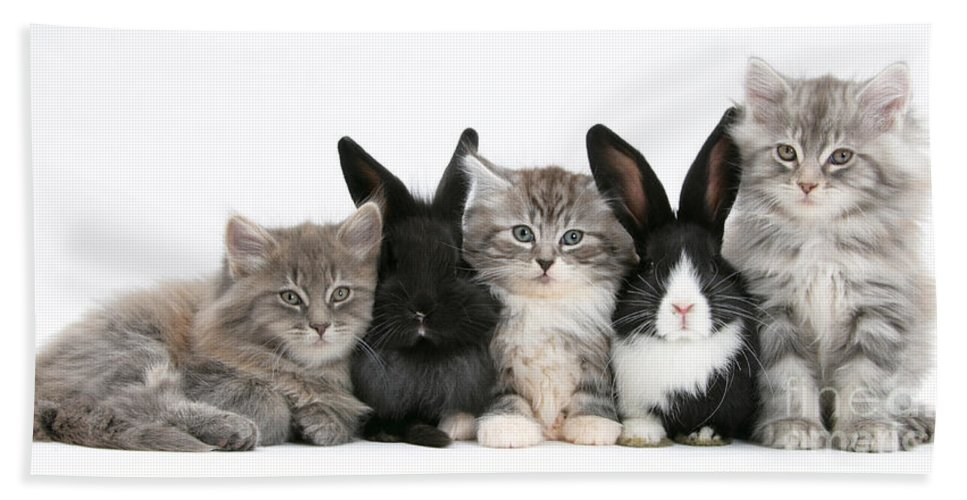 Animal Hand Towel featuring the photograph Kittens And Rabbits by Mark Taylor