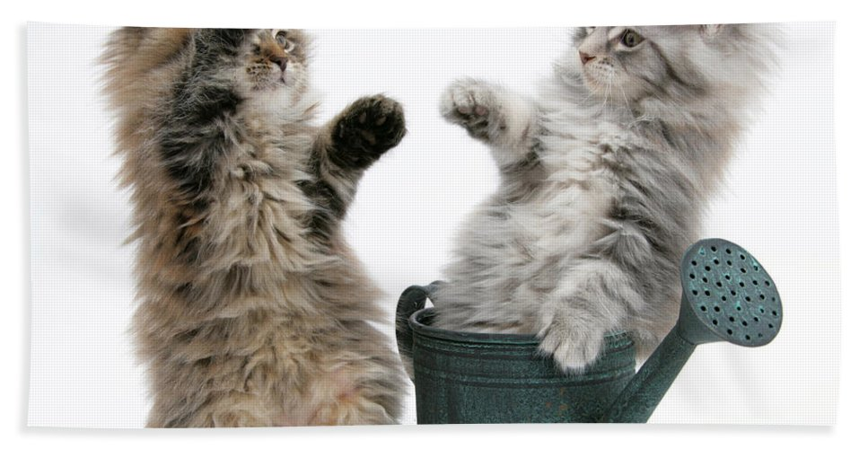 Animal Hand Towel featuring the photograph Kittens And Watering Can by Mark Taylor