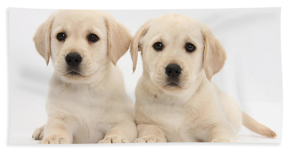 Nature Hand Towel featuring the photograph Labrador Retriever Puppies by Mark Taylor