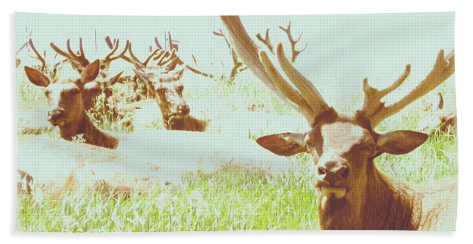 Elk Hand Towel featuring the photograph Leave Me Alone by Paula Cork