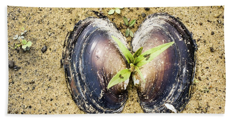 Freshwater Mussels Shell Bath Sheet featuring the photograph Life And Death by Douglas Barnard
