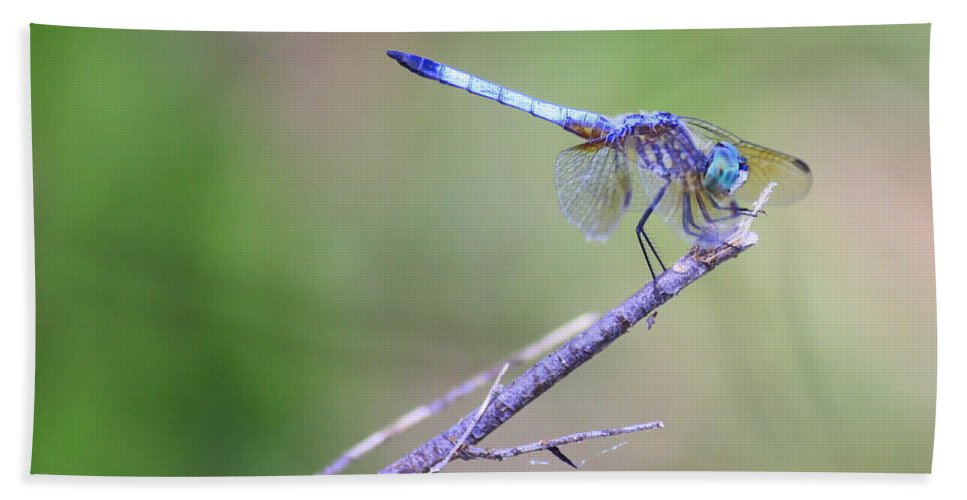 Dragonfly Hand Towel featuring the photograph Living On The Edge by Carol Groenen