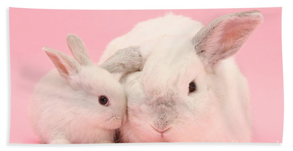 Animal Hand Towel featuring the photograph Lop Rabbits by Mark Taylor