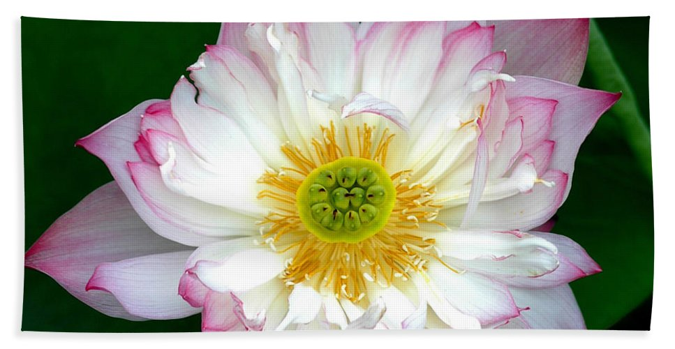 Floral Bath Sheet featuring the photograph Lotus by Mark Gilman