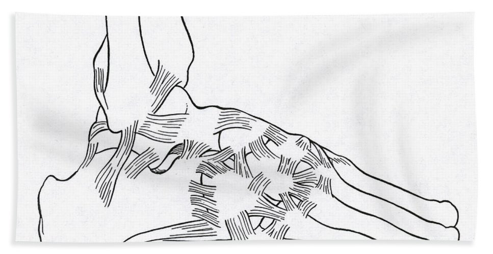 Science Hand Towel featuring the photograph Major Ligaments Of The Foot by Science Source