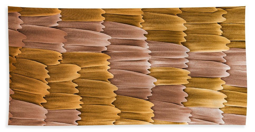 Monarch Hand Towel featuring the photograph Monarch Butterfly Scales, Sem by Ted Kinsman