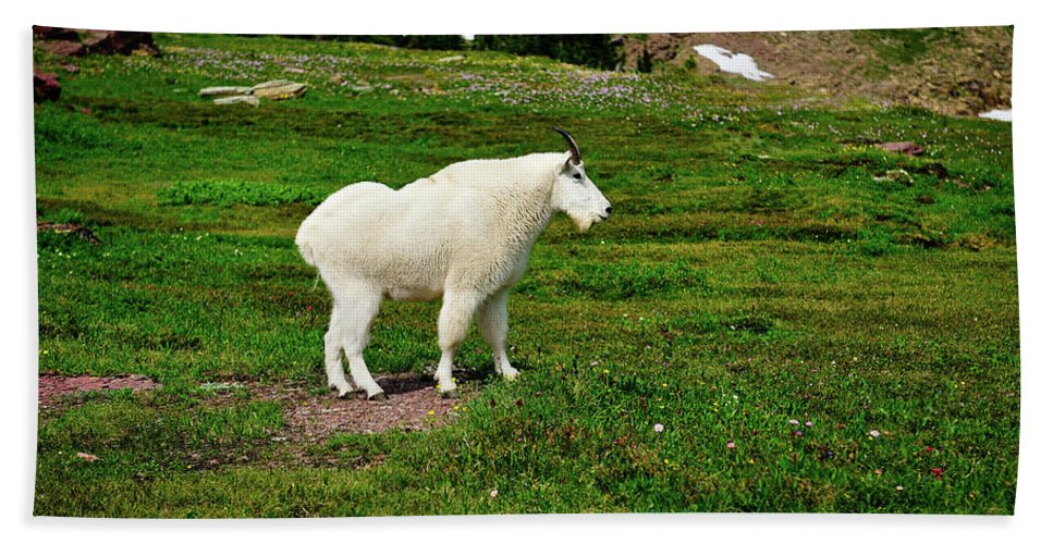 Glacier National Park Hand Towel featuring the photograph Mountain Goat by Greg Norrell