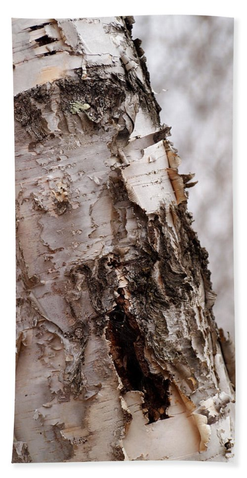 Birch Tree Bath Sheet featuring the photograph November Birch by Angie Rea