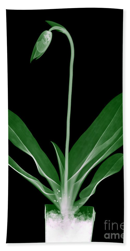 Leaf Hand Towel featuring the photograph Orchid Plant X-ray by Ted Kinsman