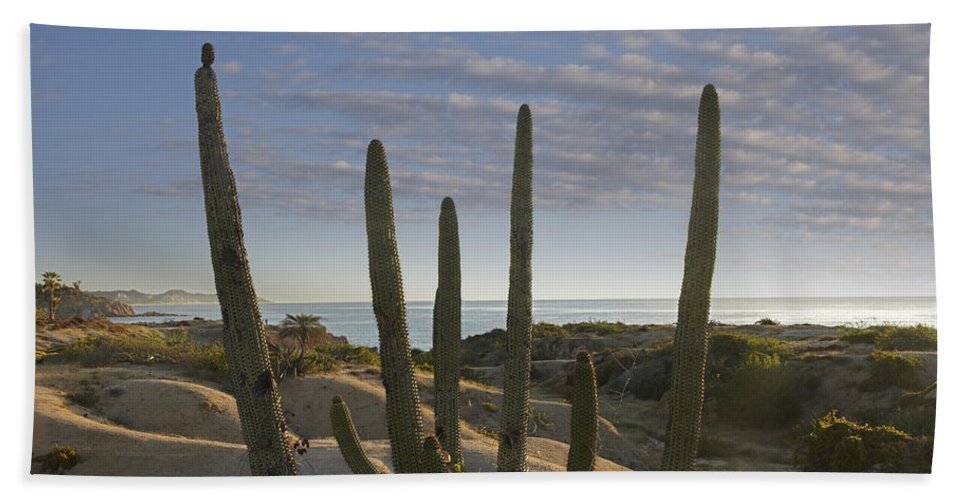 Mp Hand Towel featuring the photograph Organ Pipe Cactus Stenocereus Thurberi by Tim Fitzharris
