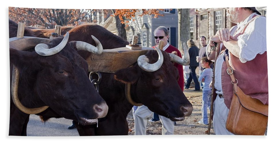 Oxen Bath Sheet featuring the photograph Oxen And Handler by Sally Weigand