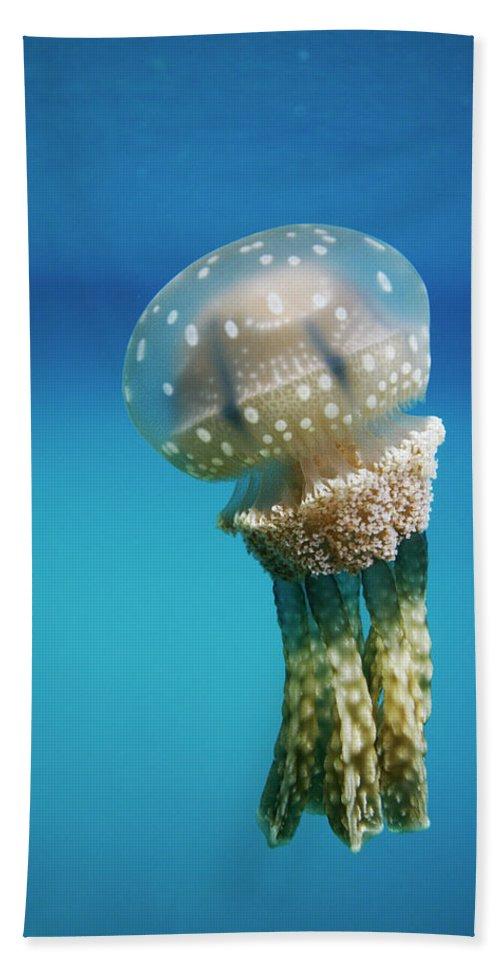 Mp Hand Towel featuring the photograph Papuan Jellyfish Mastigias Papua, Palau by Hiroya Minakuchi