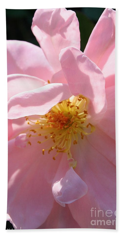 Outdoors Hand Towel featuring the photograph Pastel Petals by Susan Herber