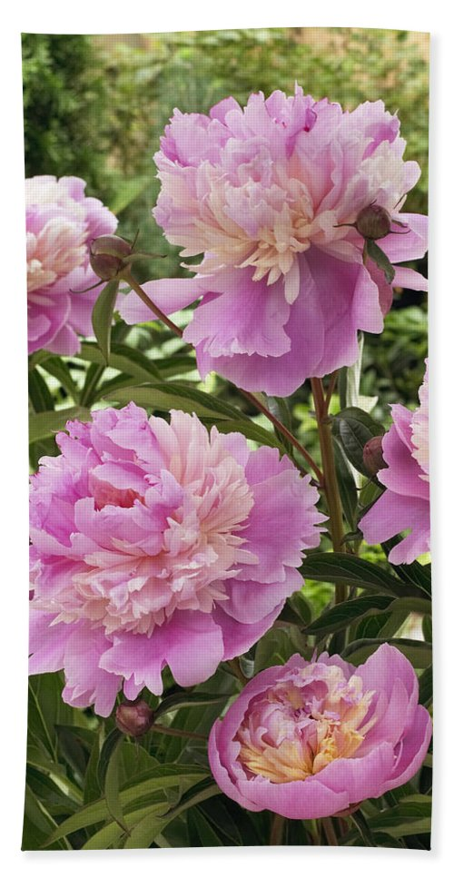 Vp Hand Towel featuring the photograph Peony Paeonia Sp Mme Emile Debatene by VisionsPictures