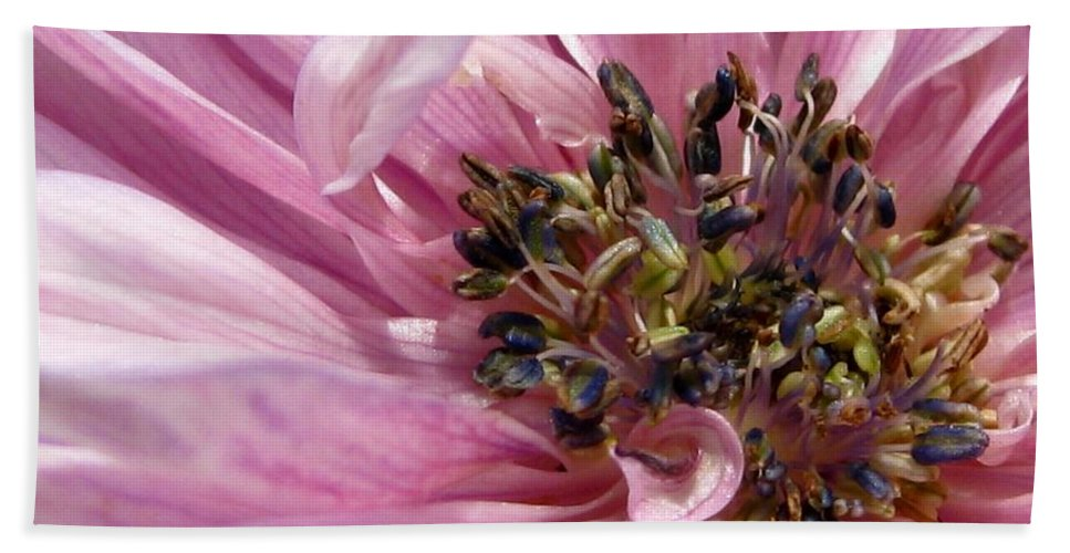Anemone Bath Sheet featuring the photograph Pink Anemone From The St Brigid Mix by J McCombie