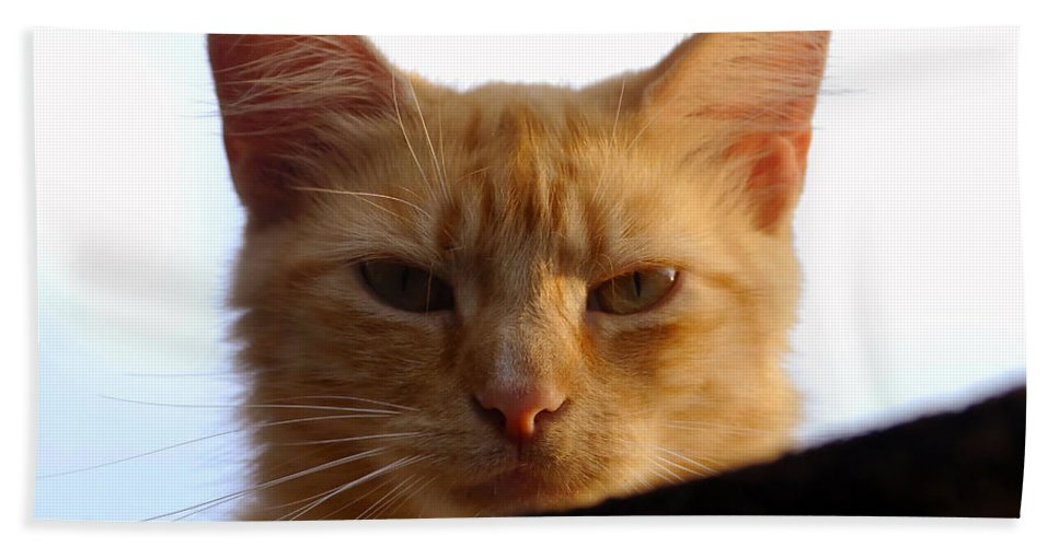 Fine Art Photography Hand Towel featuring the photograph Pretty Kitty by David Lee Thompson