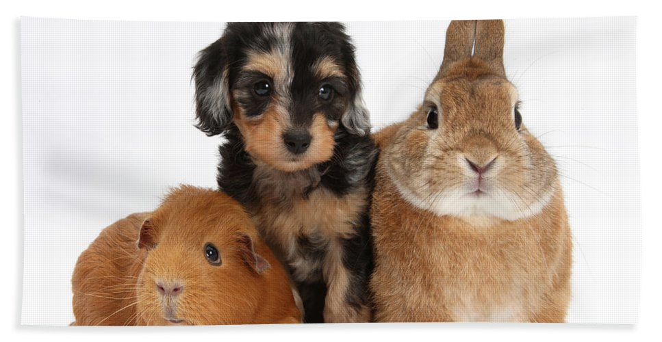 Nature Hand Towel featuring the photograph Pup, Guinea Pig And Rabbit by Mark Taylor