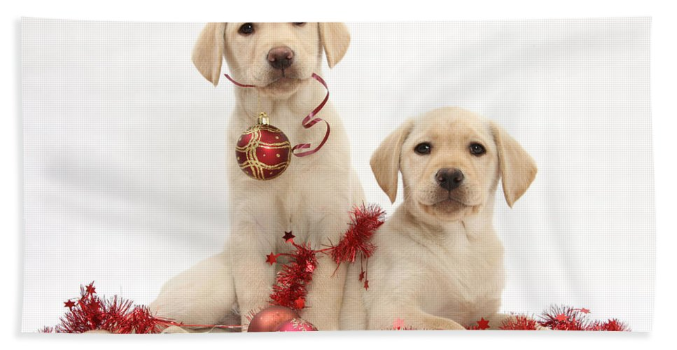 Animal Hand Towel featuring the photograph Puppies At Christmas by Mark Taylor