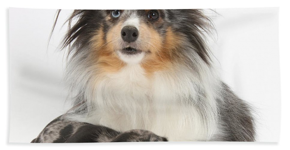 Dog Hand Towel featuring the photograph Puppy Pals by Mark Taylor
