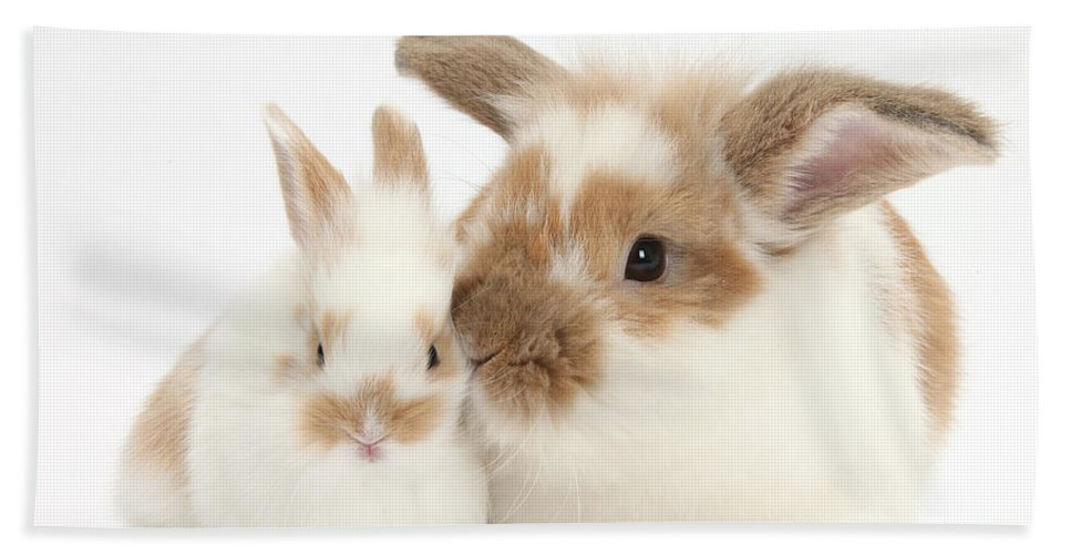 Nature Hand Towel featuring the photograph Rabbit And Baby Bunny by Mark Taylor